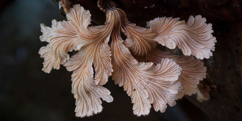 THE KINGDOM – HOW FUNGI MADE OUR WORLD